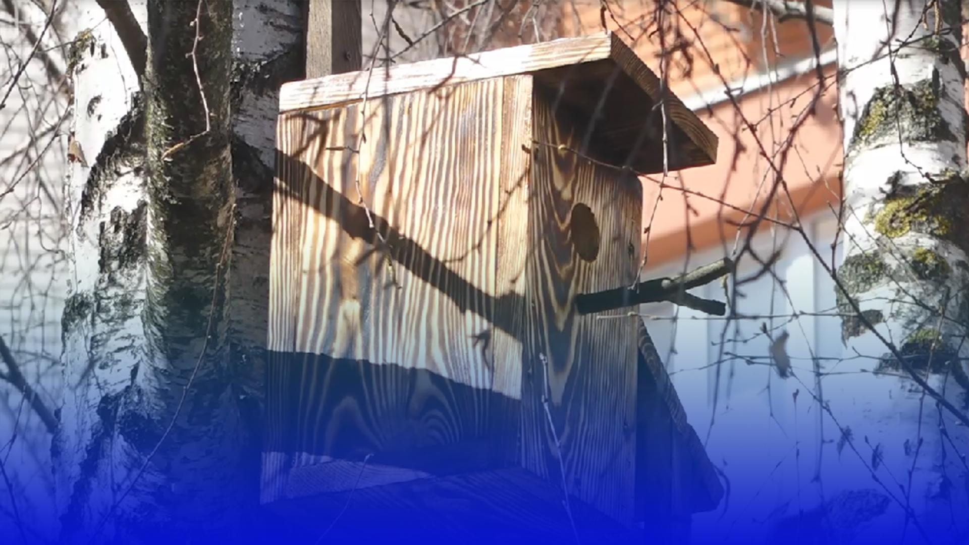 Спів птахів під вікнами: у тернопільських дворах встановлюють шпаківні
