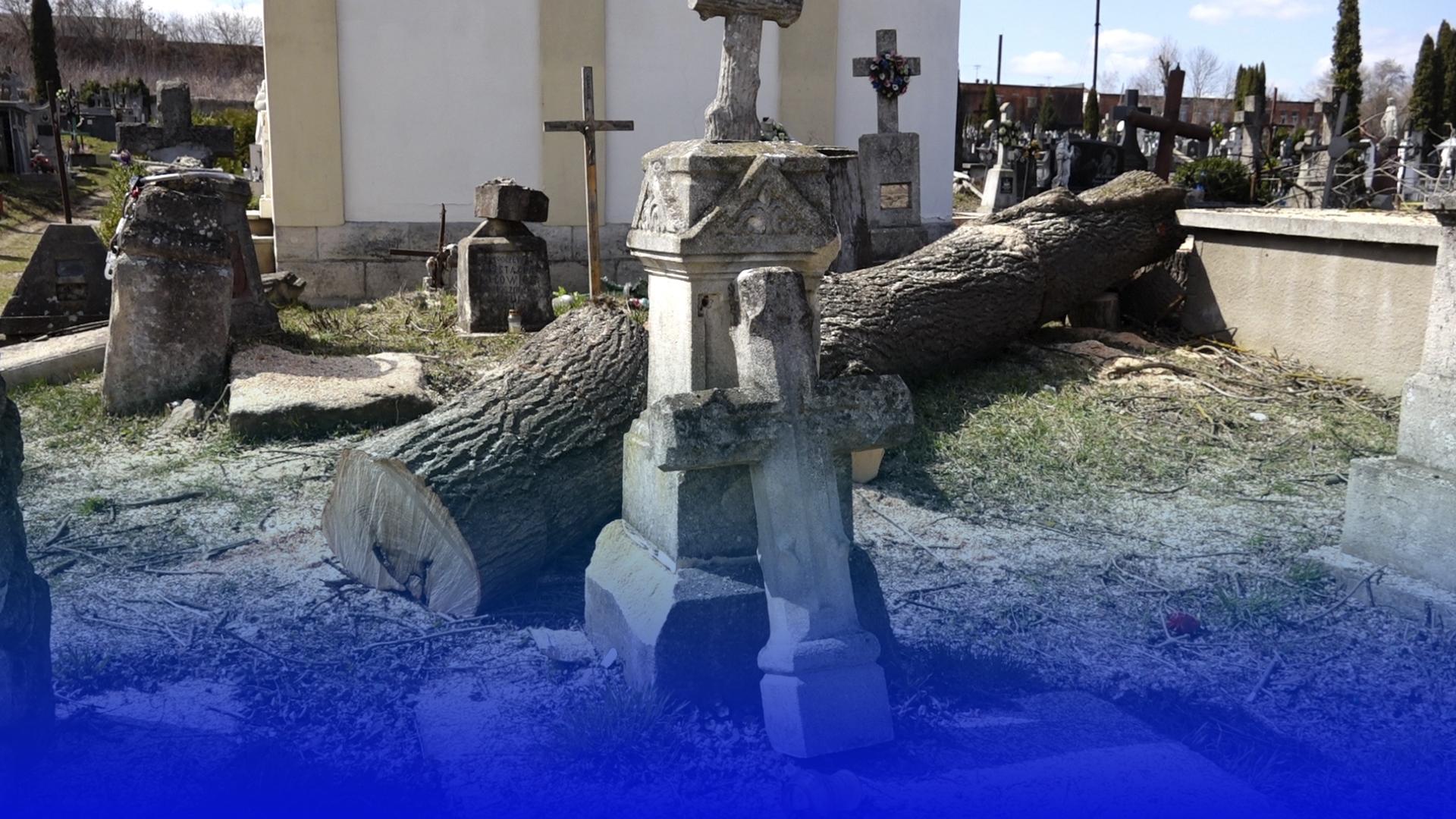Cкандал на цвинтарі: хто прибиратиме наслідки обрізання дерев на Чортківському кладовищі