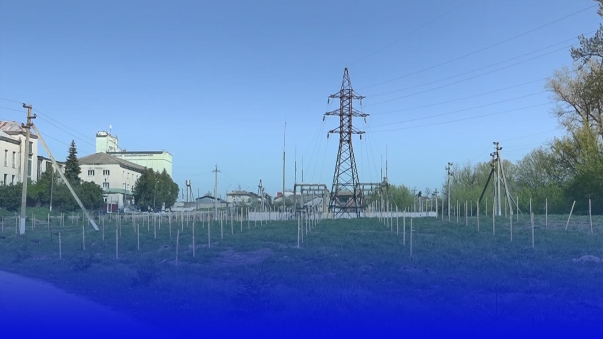 """Дерева """"під струмом"""": у Мишковичах висадили алею дубів поміж електричними стовпами"""