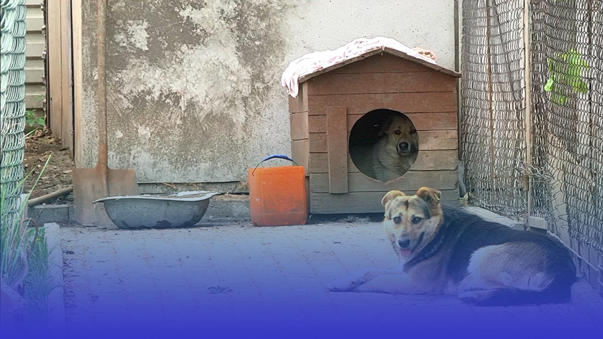 Волонтери «Ноєвого Ковчегу» шукають нове приміщення для безпритульних тварин