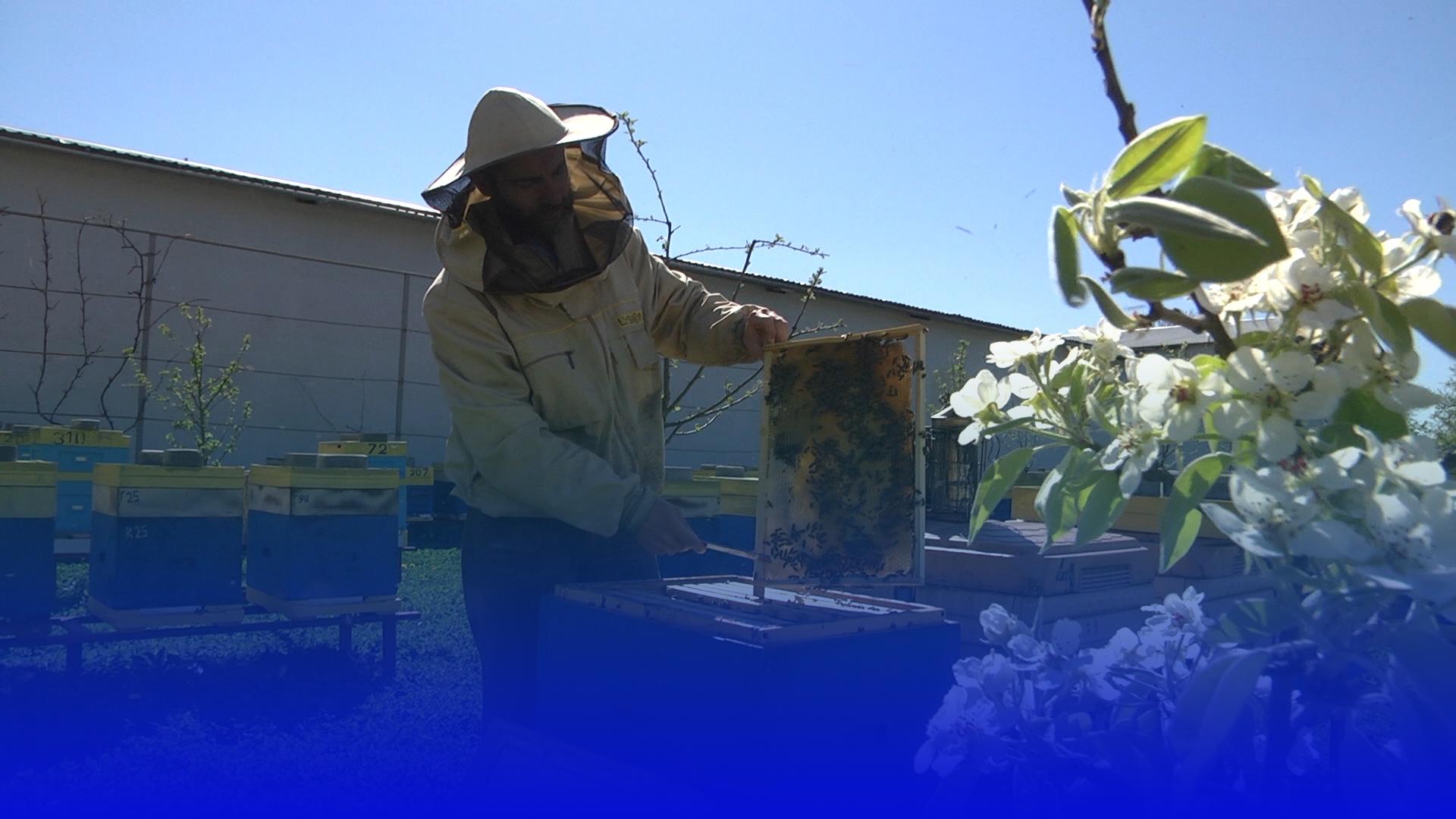 На Тернопільщині розпочали сезон окроплення полів: що варто знати пасічникам, аби вберегти бджіл