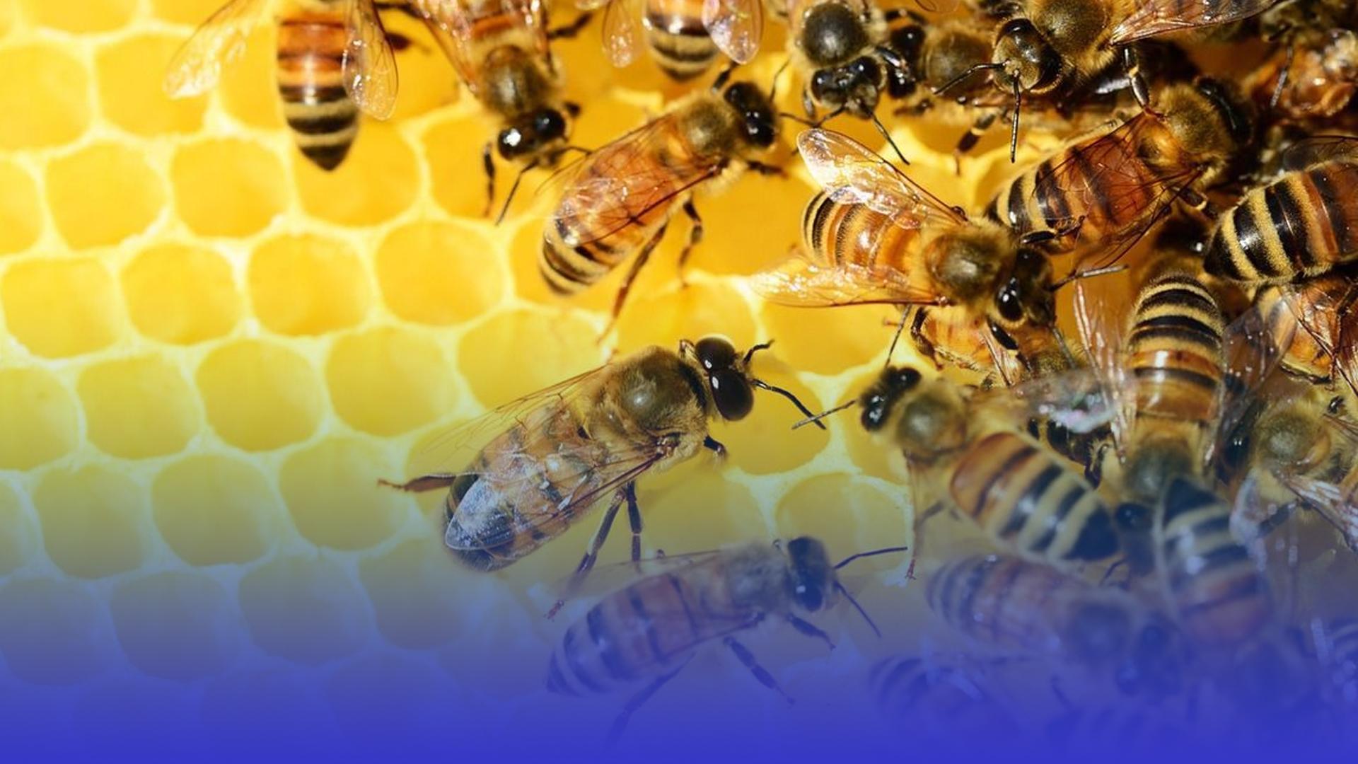 Чи впливають бджоли на врожайність?