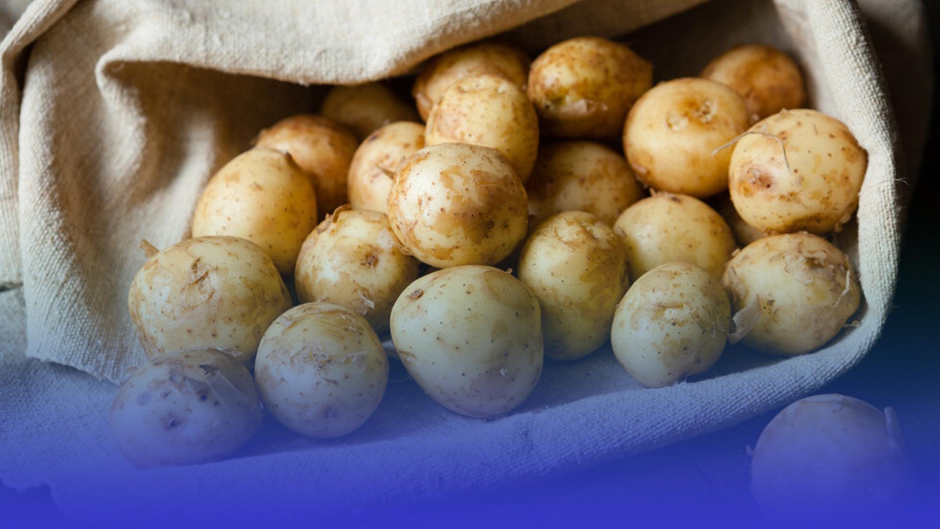 Сезон молодої картоплі відкрито: чи довіряють тернополяни місцевим ринкам