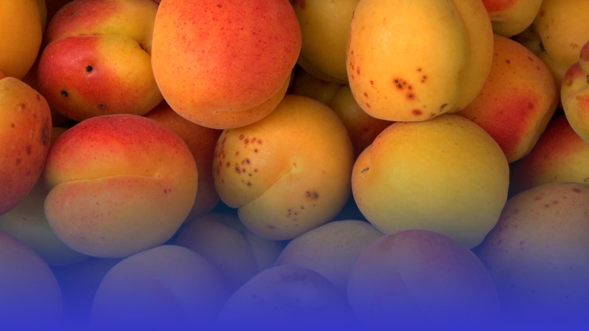 Сезон абрикосів: які ціни на тернопільському ринку