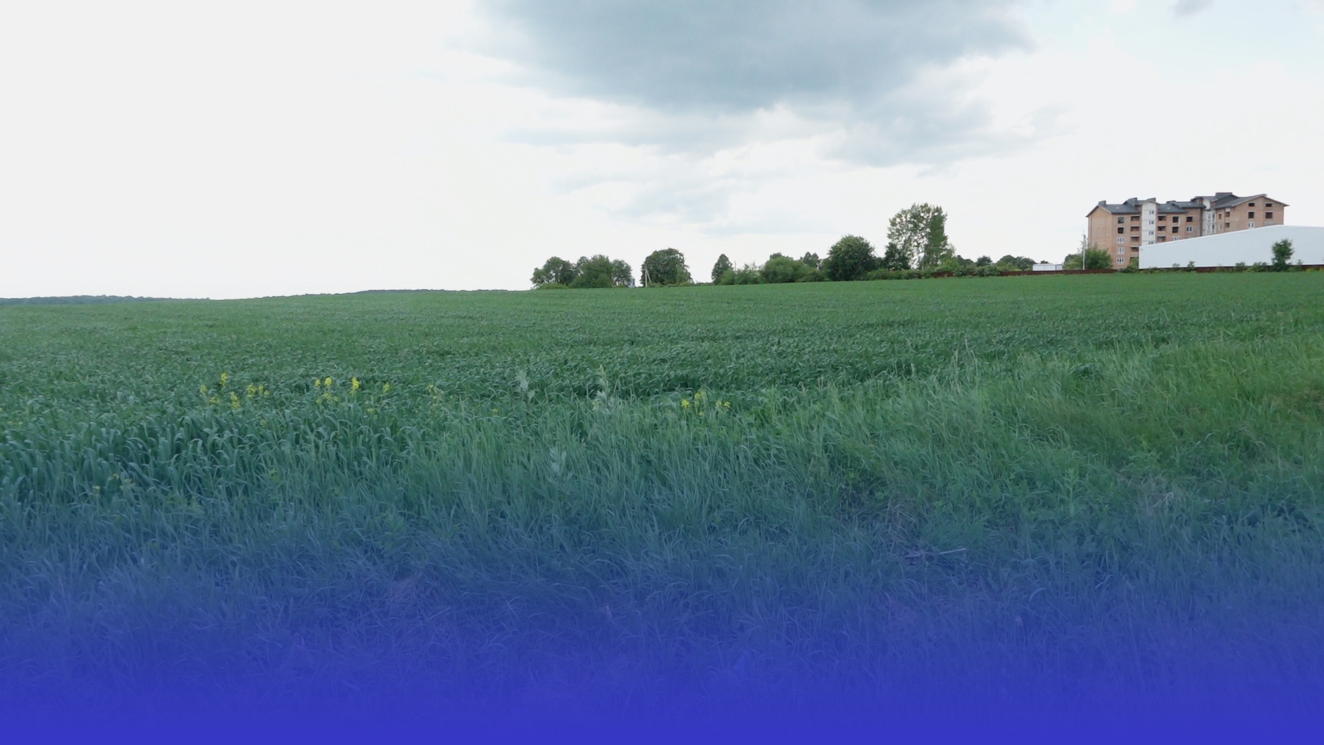 Суд залишив сільськогосподарські землі для Петриківського будинку-інтернату