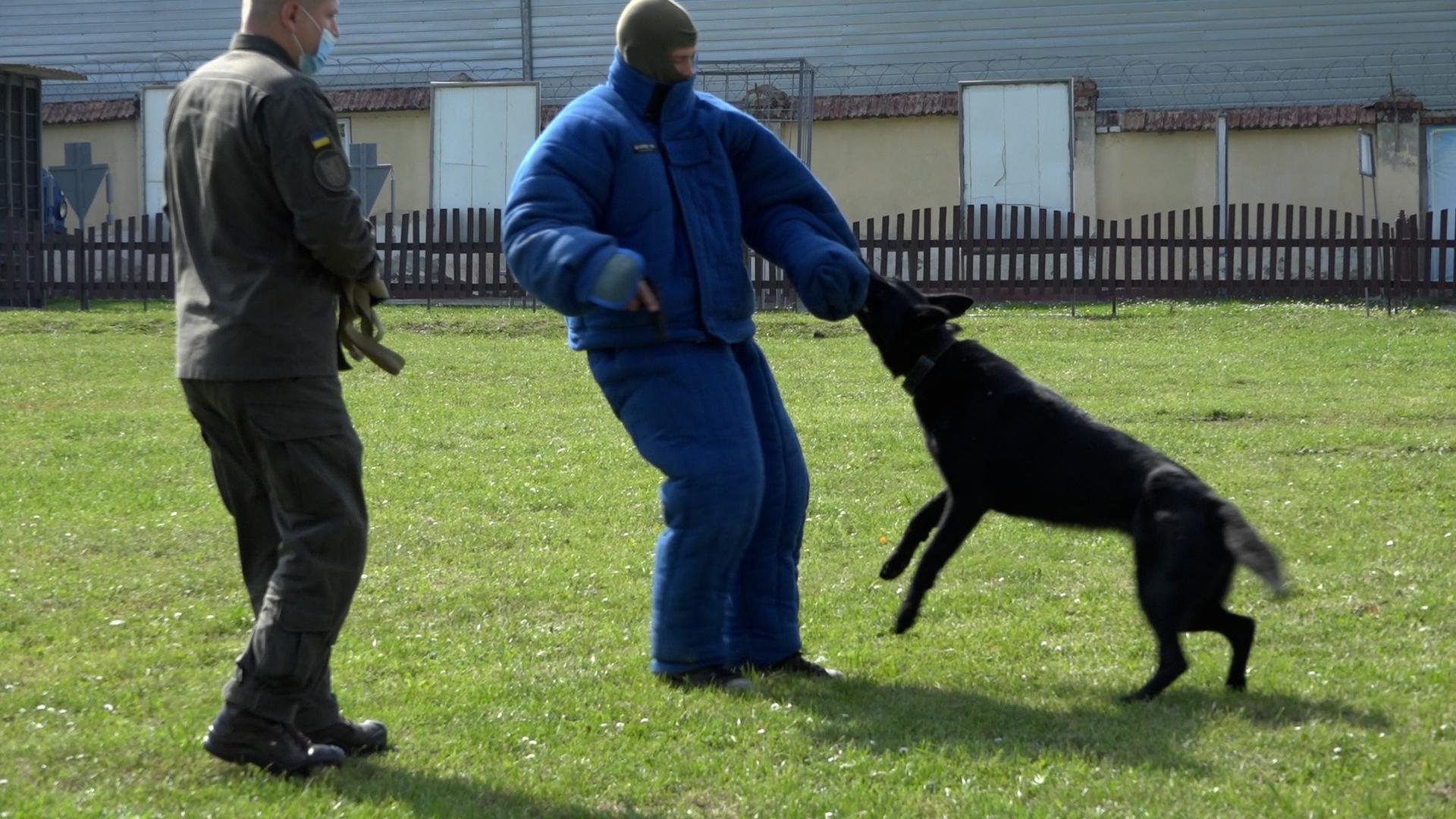 Як тренуються і працюють тернопільські собаки-нацгвардійці