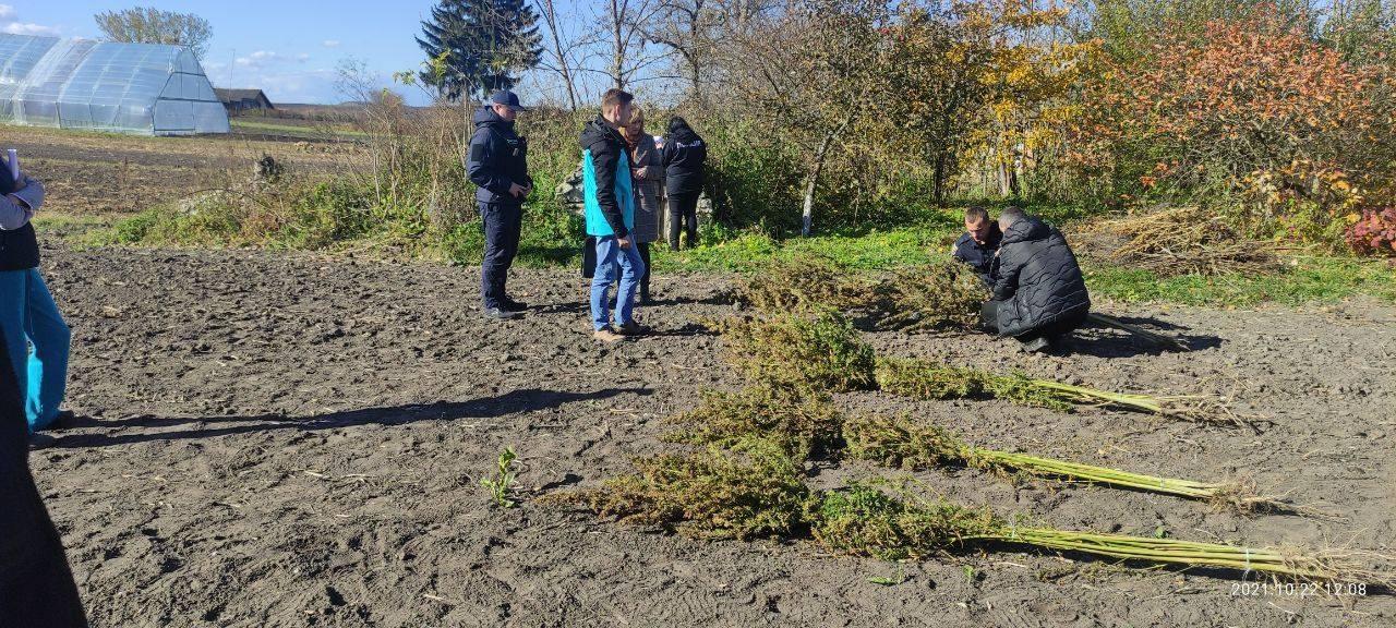 61 рослину конопель виявили на приватній садибі жителя Тернопільської громади