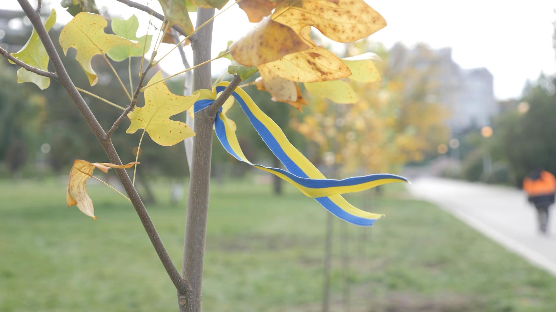 Алея «Герої не вмирають» у Тернополі поповнилася новими тюльпановими деревами