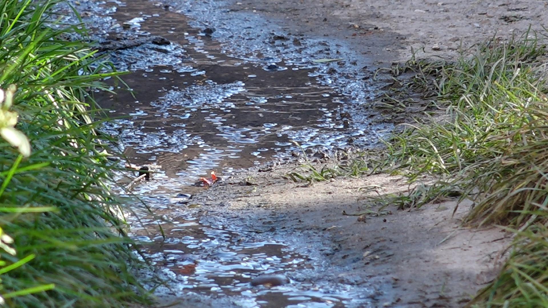 Щоденні потоки нечистот місяцями допікають жителям міста на Тернопільщині