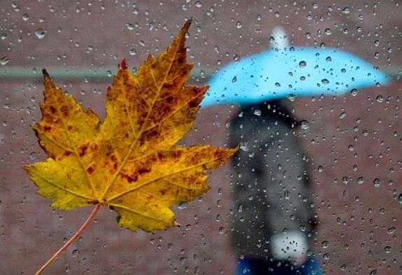 Хмарну та дощову погоду очікують на Тернопільщині